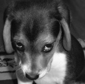 schuldig-hondje-zw